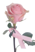 breast cancer awareness pink rose and pink ribbon