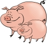 cute chubby pig cartoon