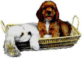 lazy puppies
