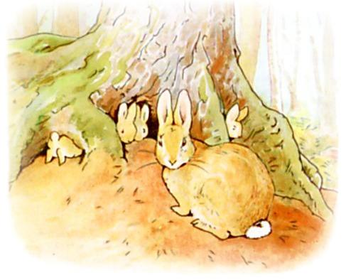 Peter Rabbit Fir Tree