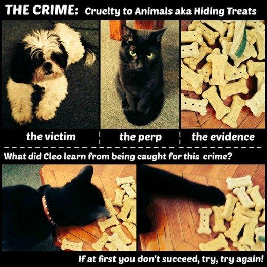 diva cat hides dog treats