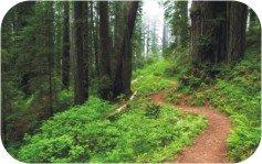 Nature Scavenger Hunt Hiking Trail