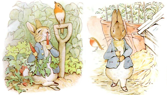 Peter Rabbit Overindulges on Veggies and Gets Sick