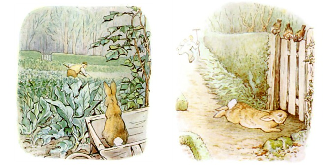 Peter Rabbit Escapes