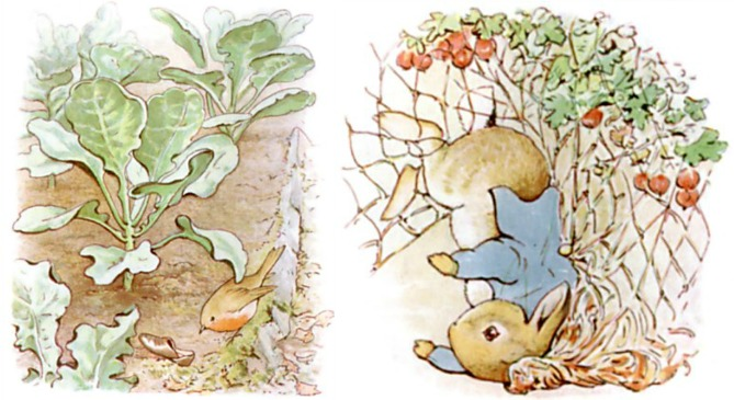 Peter Rabbit Loses His Shoes and Jacket